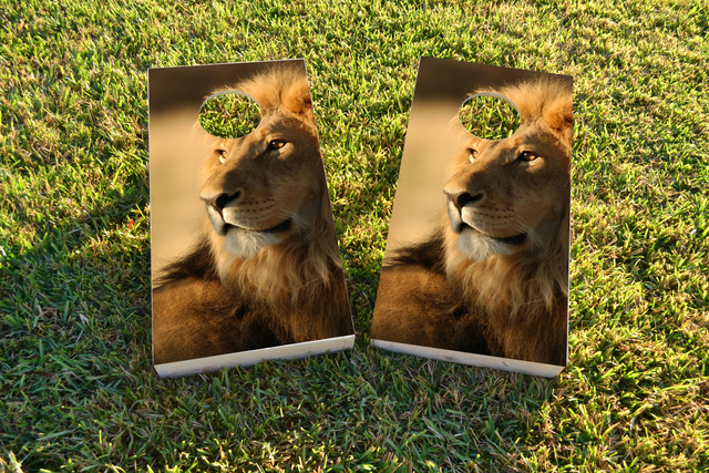 Laying Lion Themed Custom Cornhole Board Design
