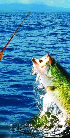 Bass Fishing Themed Custom Cornhole Board Design