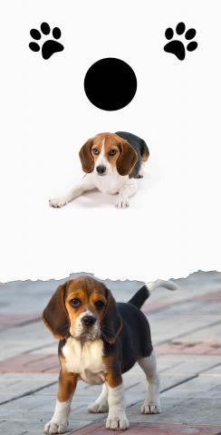 Beagle Lovers Themed Custom Cornhole Board Design
