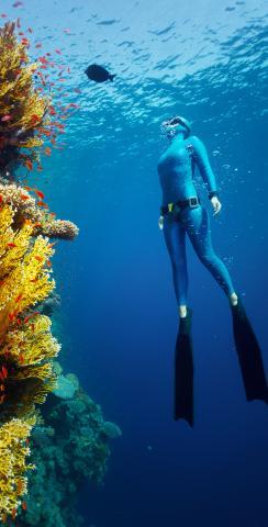 Girl Scuba Diving by Reef Themed Custom Cornhole Board Design
