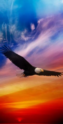 Flying Eagle in Sunset Themed Custom Cornhole Board Design