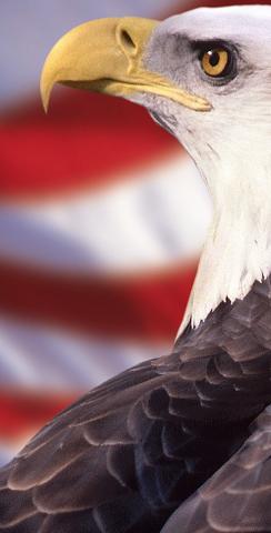 Patriotic Bald Eagle Themed Custom Cornhole Board Design